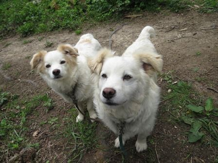 Remember our urgent appeal for Tom and Jerry? They are now living their best life happily in forever sanctuary together  Thank you to everyone who played a vital part in their #happyending #saveastray #straydogs #adoptdontshop #savingsufferingstrays #dogspic.twitter.com/nE6pkH4c0E
