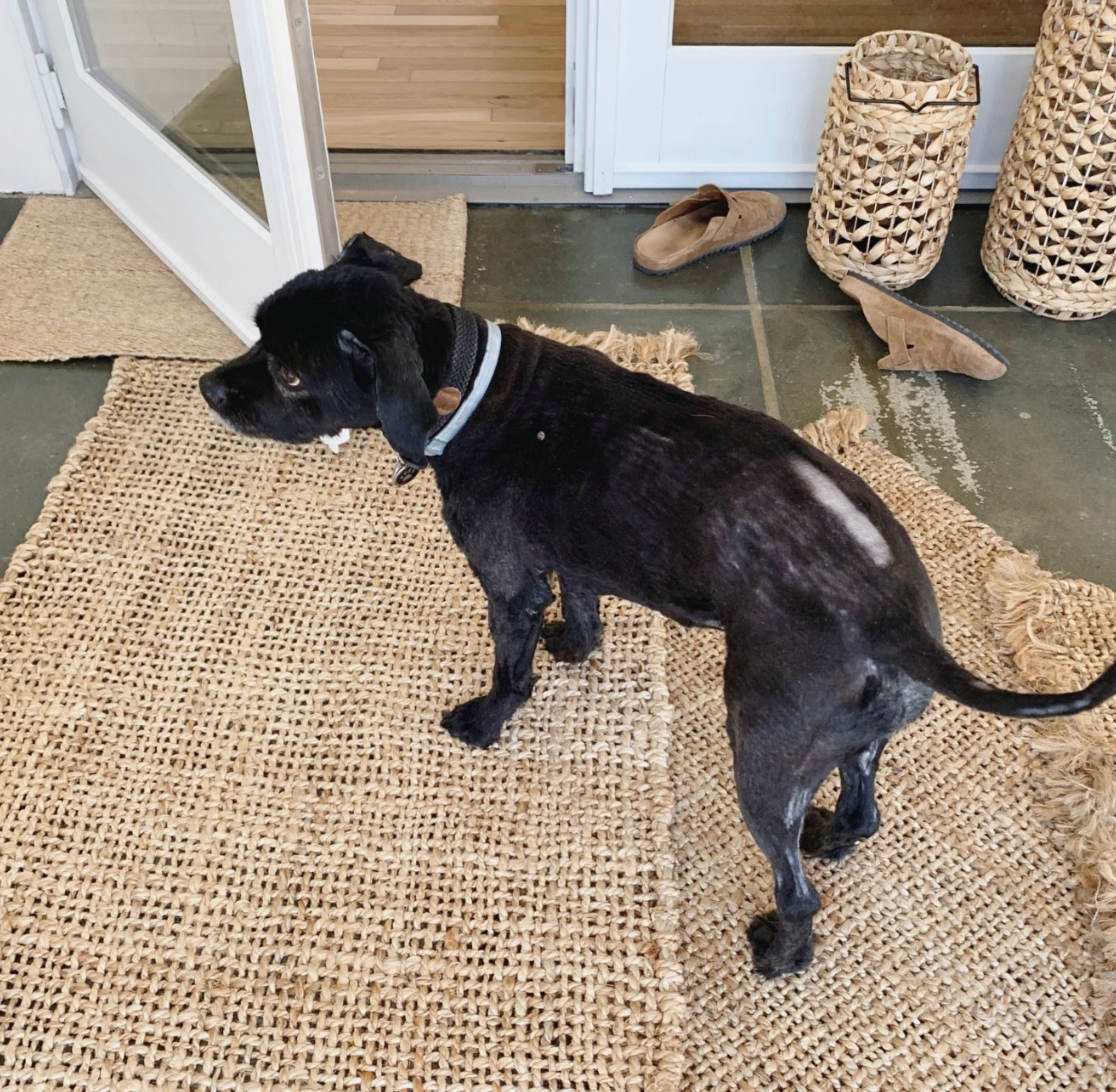 Nate Berkus On Twitter Shout Out To Dog Groomers Everywhere 1 Tucker Please Forgive Me 2 I Will Never Again Ask Why Grooming Takes So Long I M Sticking To Interior Design Moving