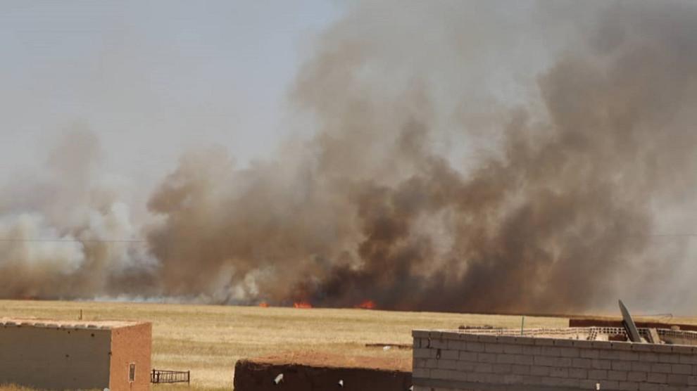 Поджоги сельскохозяйственных угодий приняли в Ираке и Сирии массовый характер