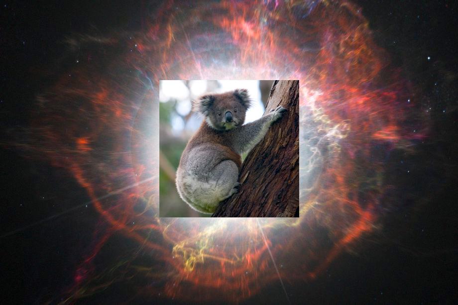"A Fast, Blue ""Koala"" Shines Bright in a Distant Galaxy aasnova.org/2020/05/15/a-f… @astrobites"