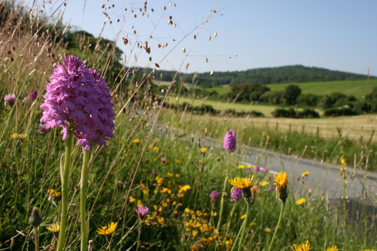 Great to see a #RoadVerges @timesletters declaring We should all encourage our councils to make their less stringent mowing regimes permanent. Plantlifes petition approaching 100,000 signatories calls for that change. Pls sign & share to show you care plantlife.love-wildflowers.org.uk/roadvergecampa…