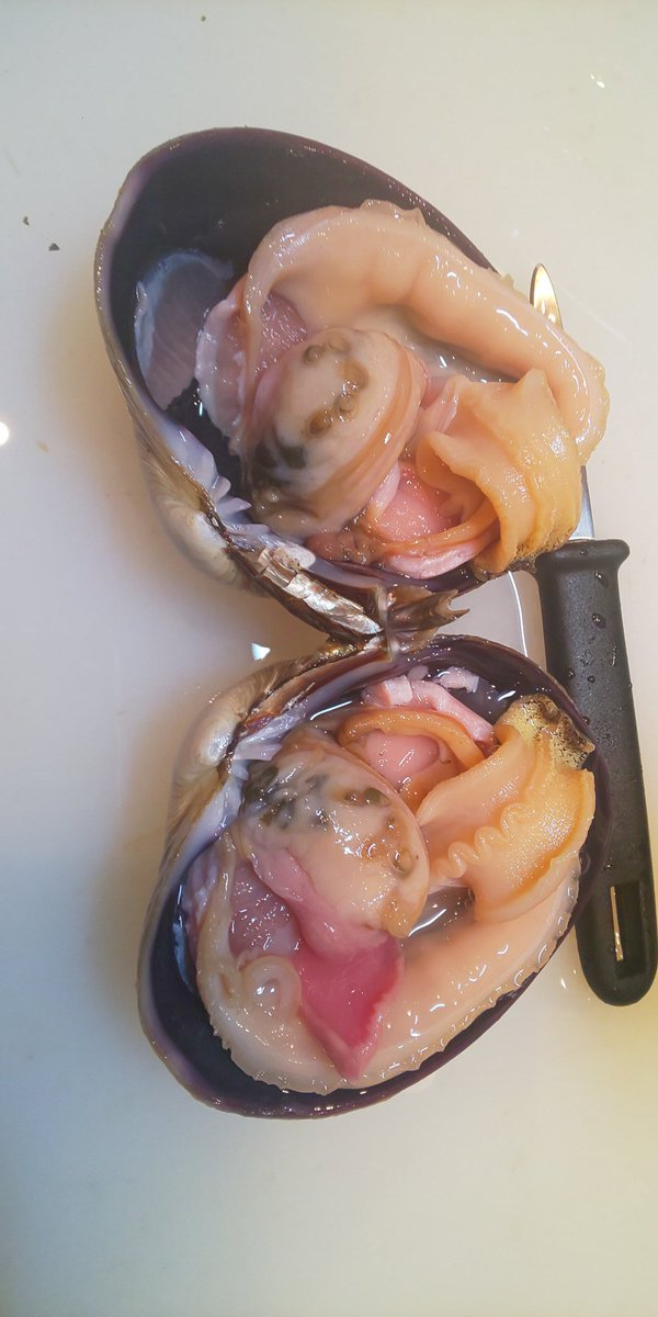 おはようございます  本日は快晴 店頭鮮魚市やってますよ!  大アサリ 黒鯛 天然平目 カレイ 等々 スーパー等より40%off程度で販売中 調理代は別途250円となりますが 片身を刺し身・片身を煮付けなどの わがままできますぞ!  賄いは天丼とハンバーグ  #豊橋 #テイクアウト #お弁当 #海鮮pic.twitter.com/l4Y4KS48Ob