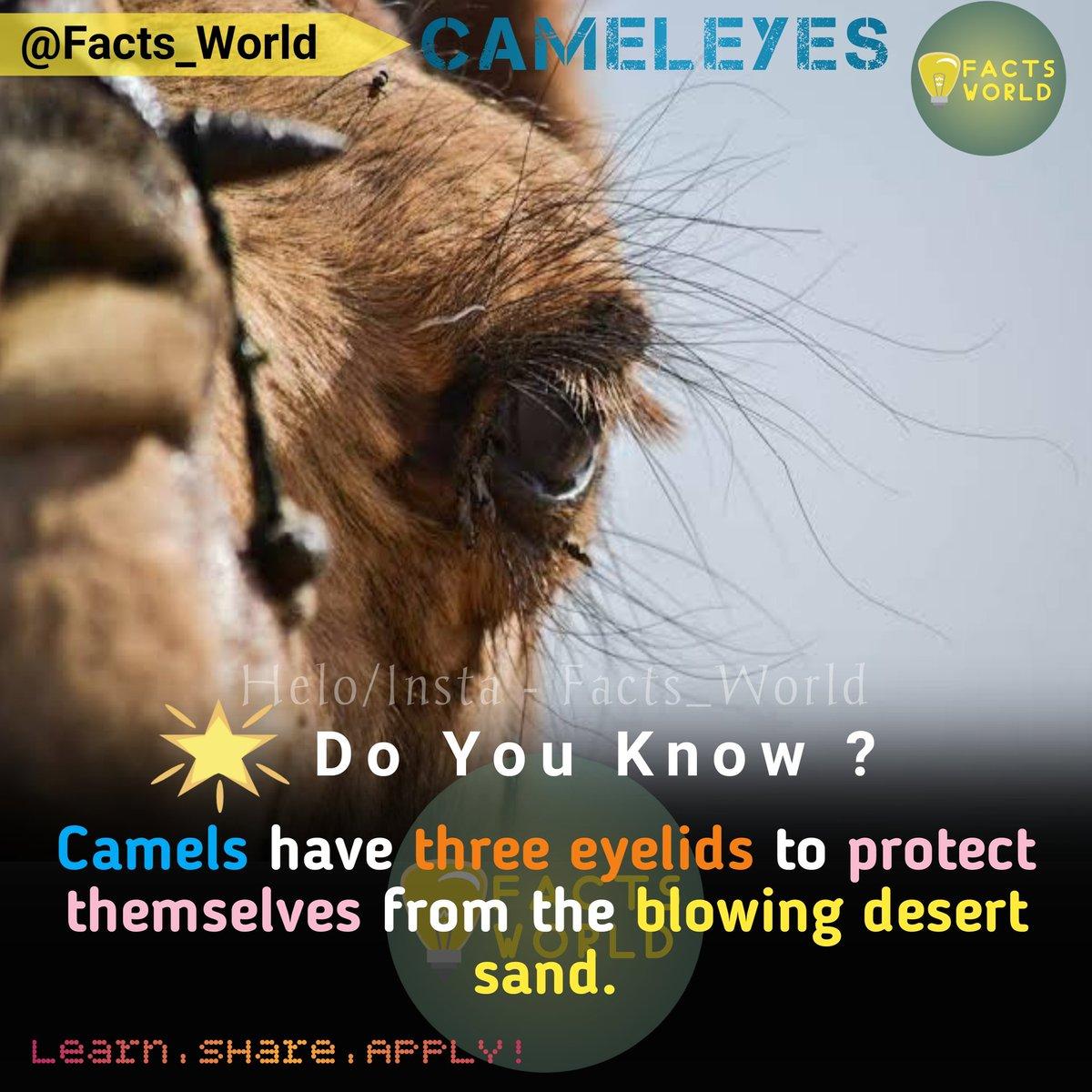 DO YOU KNOW ? Camels have three eyelids to protect themselves from the blowing desert sand. #hindifacts#factsinhindi#rochak#rochaktathya#rochaktathya123#rochakfacts#rochakjankari#rochak_tathya123#gyankibaat#gyan#gyanopedia#hindigk#upscmotivation#gajabthathya#gazabpost#upscgk pic.twitter.com/XjnjrF7g9n