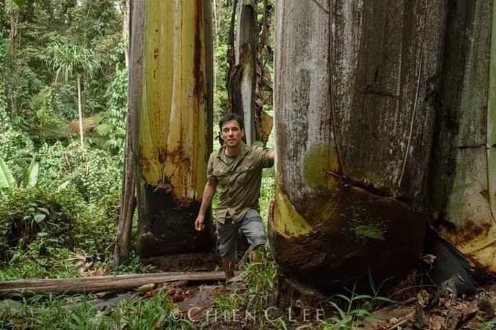 Pisang Musa Ingens, dari Papua barat, hari pertama buka puasa pake ini, niscaya kenyangnya sampe lebaran kali ya fess https://t.co/F6Hl6fGprz