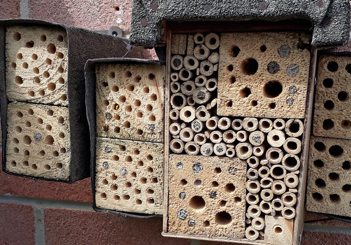 Bees update - Plenty of the chambers in use now with lots already sealed up. Right hand extension with the larger holes not proving popular. Quite addictive watching this progressing! #lockdown #bees #bughotel #beehotel