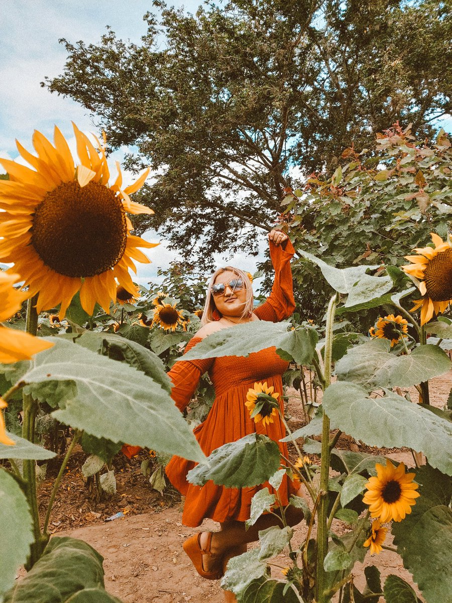 I'm lost in an ocean of beautiful sunflowers.  ~ May your life be as beautiful as a field full of sunflowers.  . . #sunflowers #Girasoles #nature #sheisnotlost  #traveler #travelphotography #discoverearth #dametraveler #beautifuldestinations #postcardplacespic.twitter.com/CaTvekHMLd