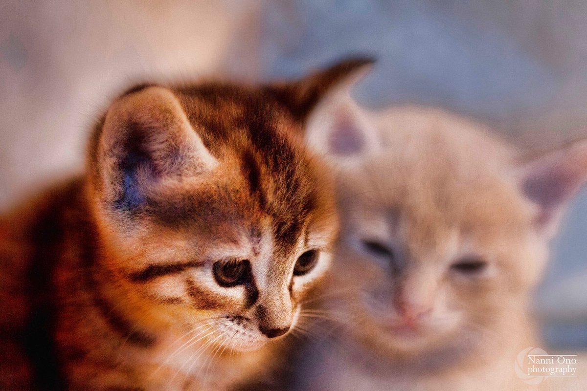 Brothers. #sardinia #cat #cats #photography #pet #kitty #photographer #sardegna #welcometosardegna #animal #felinepic.twitter.com/CFDPnwtLeN