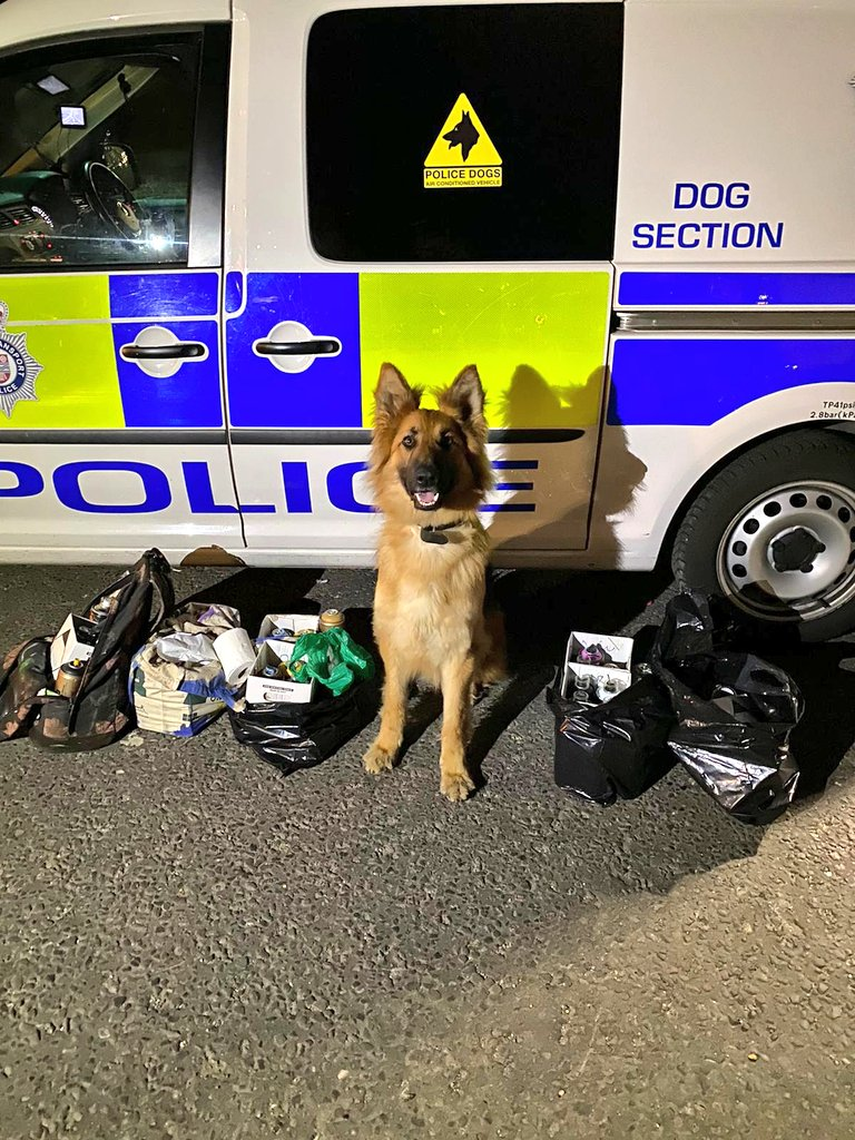 Wow look at the smile on PD Frankie!! Two males reported trackside saturday night in @BTPEssex PD Frankie deployed & tracked both of them lying in the overgrowth hiding from police. 7 bags recovered containing spray cans, cameras, graffiti designs & masks. 🐶🐾