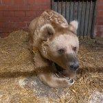 Image for the Tweet beginning: Tierarzt Dr. Barnewitz von unserem