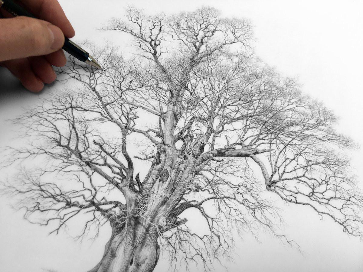 Large ancient oak – nearly complete #GPS #Trees #drawing #treeart #artist #nature #gardening #oak #woodland #forest #art #artcollector #artcommission  http://gpstrees.compic.twitter.com/eUTOt6ybo0