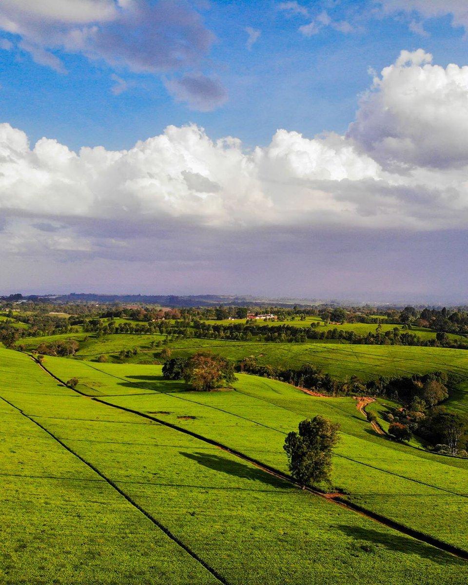 """Kenya Pics on Twitter: """"Tigoni, Limuru. Photos by John Mburu… """""""