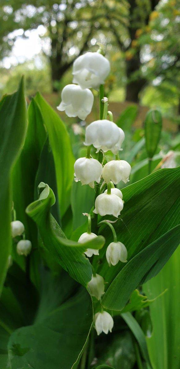 Il fiore preferito della Regina Elisabetta ha un significato speciale che ha a che fare con il suo passato
