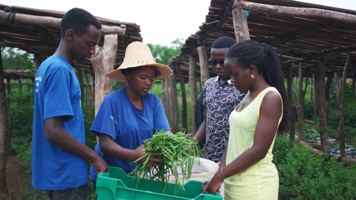 [THREAD]  #pre-COVID throwback to our students first harvest last year! Beyond farm-to-table, our students went classroom-to-table, applying what they learned across an entire agricultural value chain. pic.twitter.com/0TeTKovb5r