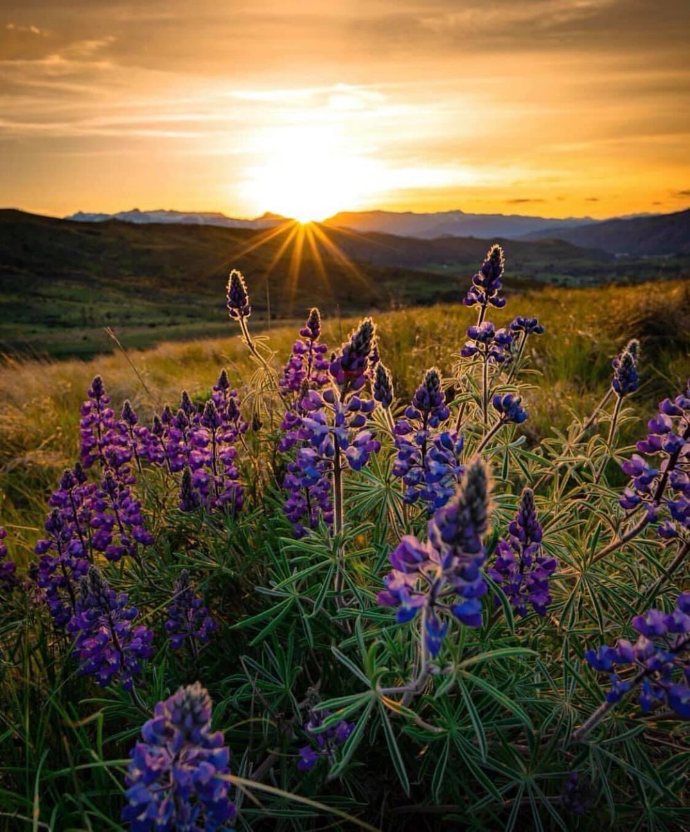 The wildflowers are a gift from the foothills. We hope to welcome you back to our amazing valley sometime in the future. For now we can give you something to look forward to! : Shannon Bolisig #ncwlove #pickwenatchee #stayhomestayhealthy #wenatchee pic.twitter.com/Rq0hyMH7ik