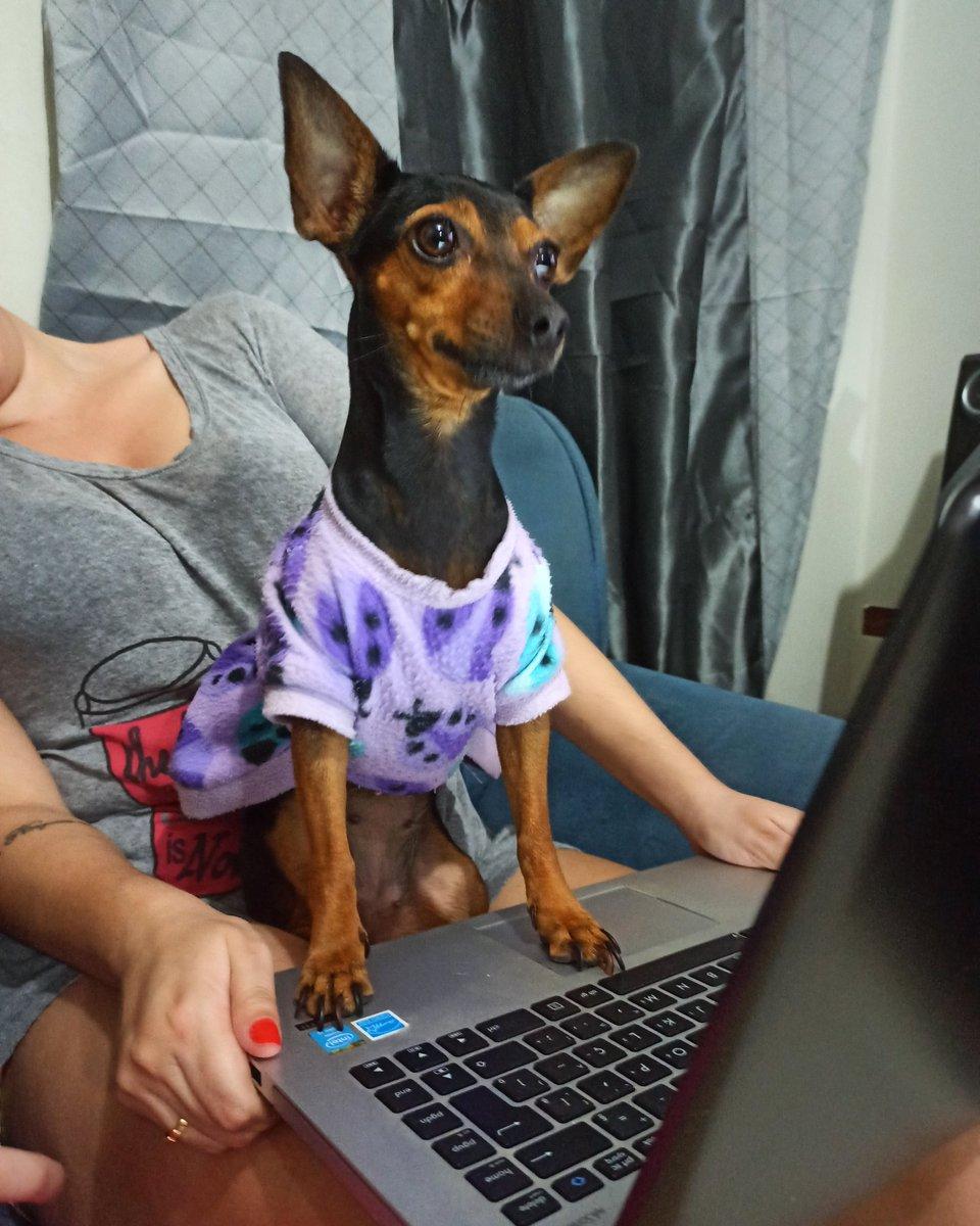 Lully TI hausus.... #dog #pet #watchingpic.twitter.com/iS8ICfFG0j