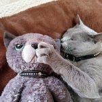 愛猫のお友達をそっと側に置いたら??可愛すぎた!