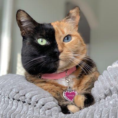 Venus Two Face Cat (@Venustwofacecat)
