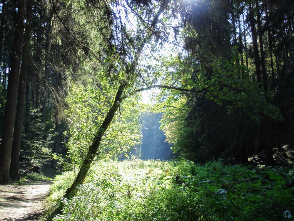 I remember walking along this path in Cesky Raj in the Czech Republic waiting for Hobbits or Black Riders to emerge.  #amreading #story #Tolkien #amdreaming #photography  #LotR #nature #landscape #forest #CeskyRaj #naturephotography  #justgoshoot pic.twitter.com/WIcRrb1bWV