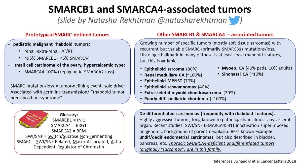 Natasha Rekhtman Md Phd On Twitter 9 Important Point In Lung Smarca4 Mutations Loss Also Occur In 7 Of Usual Nsclc So Just Smarca4 Undif Tumor Only If Tumor Has Morphology That Makes