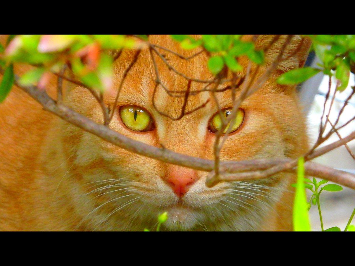 『Cat's eyes』 . . . #猫 #オッドアイ  #coregraphy  #photography  #カメラ女子 #写真好きな人と繋がりたい  #ファインダー越しの私の世界 pic.twitter.com/ZDDqQIVCEN