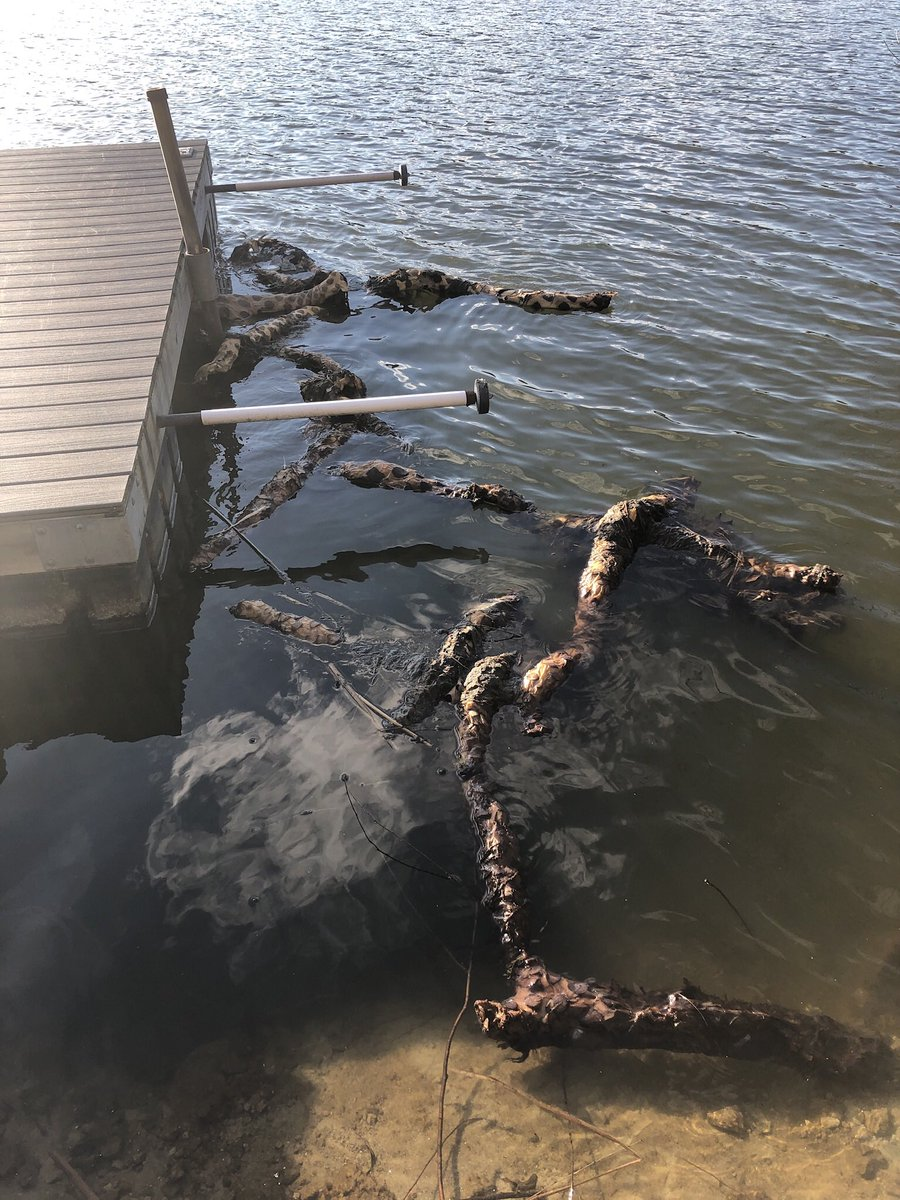 The sea monsters have returned to the lake. Nature is healing.