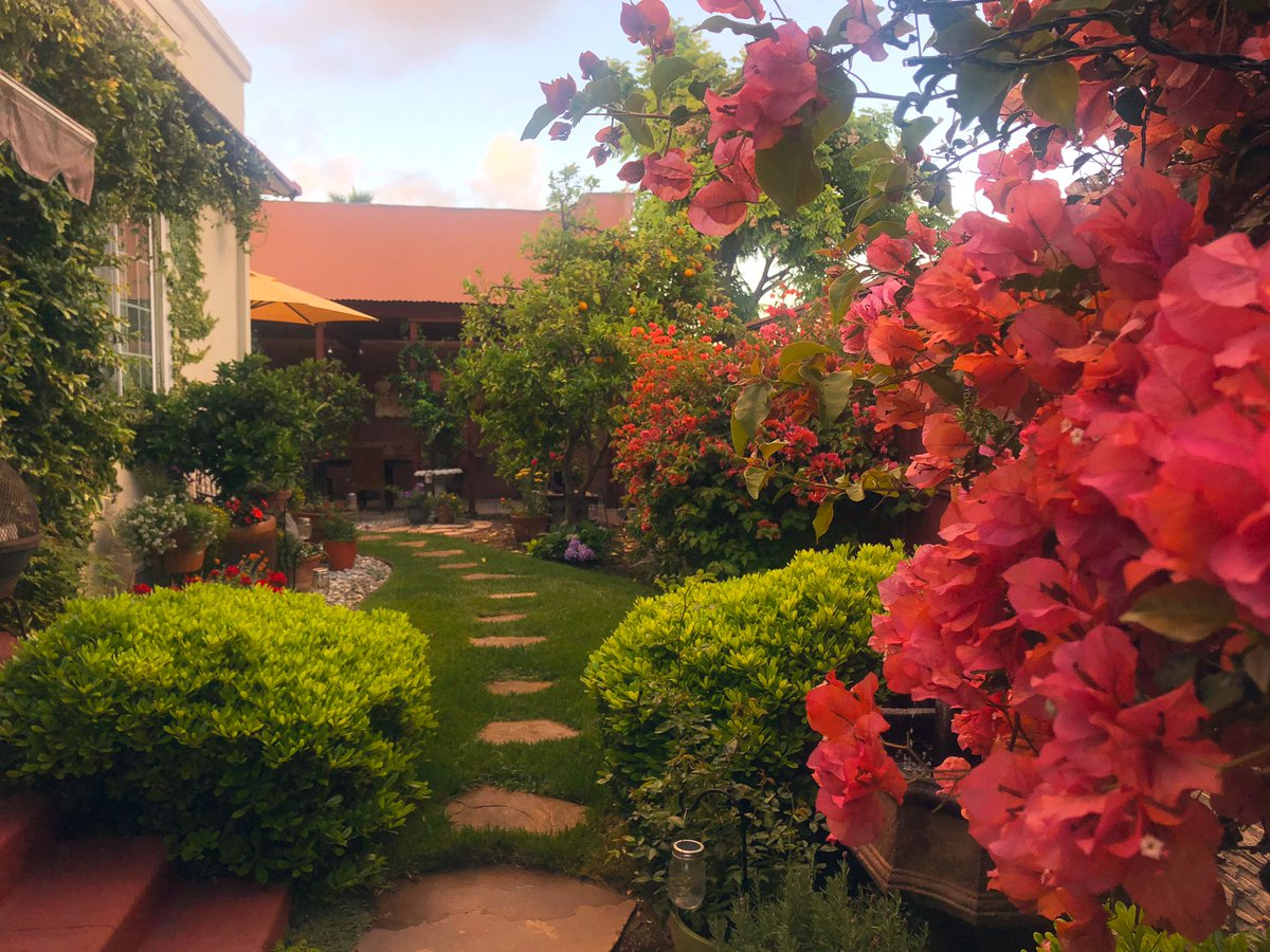 It's a beautiful day, don't let it get away ☀️🍃🌺 #SanDiego #mygarden #happyplace
