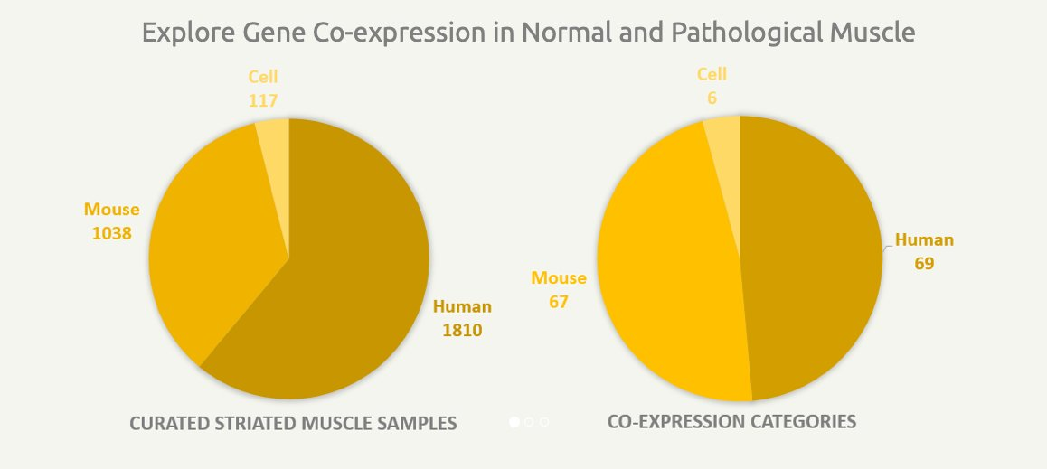 MyoMiner: A new database to explore #muscle specific co-expression of genes #CitedEnsembl #BioMart @BMC_series https://t.co/gR7UaIX6s6 Web: https://t.co/2dX9SgpXzM  #transcriptomics #bioinformatics #compbio https://t.co/k2w83yumYF