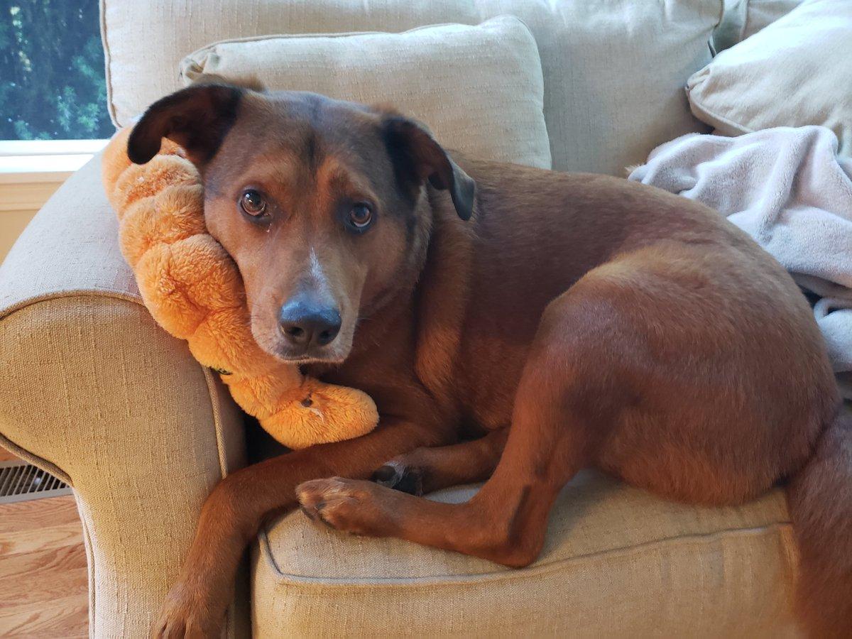 @des_linden @dog_rates