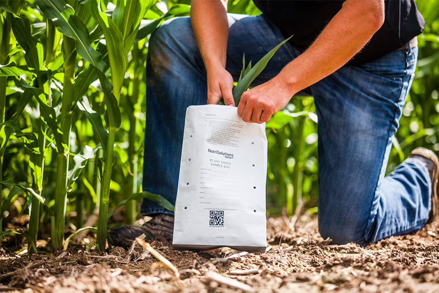 Timely tissue sampling at critical growth stages can give you a jump on correcting nutrient deficiencies before they cost you in ROI and yield potential. Talk with your agronomist now about collecting samples in your field.  https://t.co/14nakL22qm https://t.co/yNkFW2n4jG