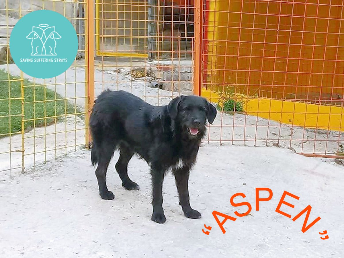 """""""MEET Our Dogs MONDAY """"  Meet 'ASPEN'  one of our longer term residents of four years. This nervous girl loves hanging out with her friend Ella who she spends most of her time with http://www.savingsufferingstrays.com  #saveastray #rescuedog #dog #savealifepic.twitter.com/5KYswgOwED"""