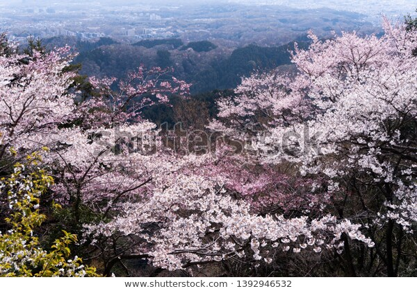 a Landscape seen from the sacred Mount Takao,Kanto,Japan  https://www.shutterstock.com/ja/image-photo/landscape-seen-sacred-mount-takaokantojapan-1392946532 … @Shutterstock #stockphoto #stockphotos #photo #photography #nature #春 #桜 #さくら #サクラ #花 #季節 #ピンクpic.twitter.com/QKz6RaKz5H