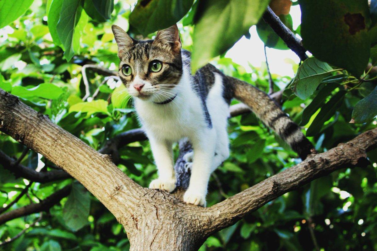 My new model  Her name is Neko  #CatsOfTwitter #Cat #CatsOnTwitter #catslife #nekocat #PictureOfTheDay #gatos #catlovers #gatitos #catlove #photooftheday #photographylovers #petportraitpic.twitter.com/CiVvO59hwh
