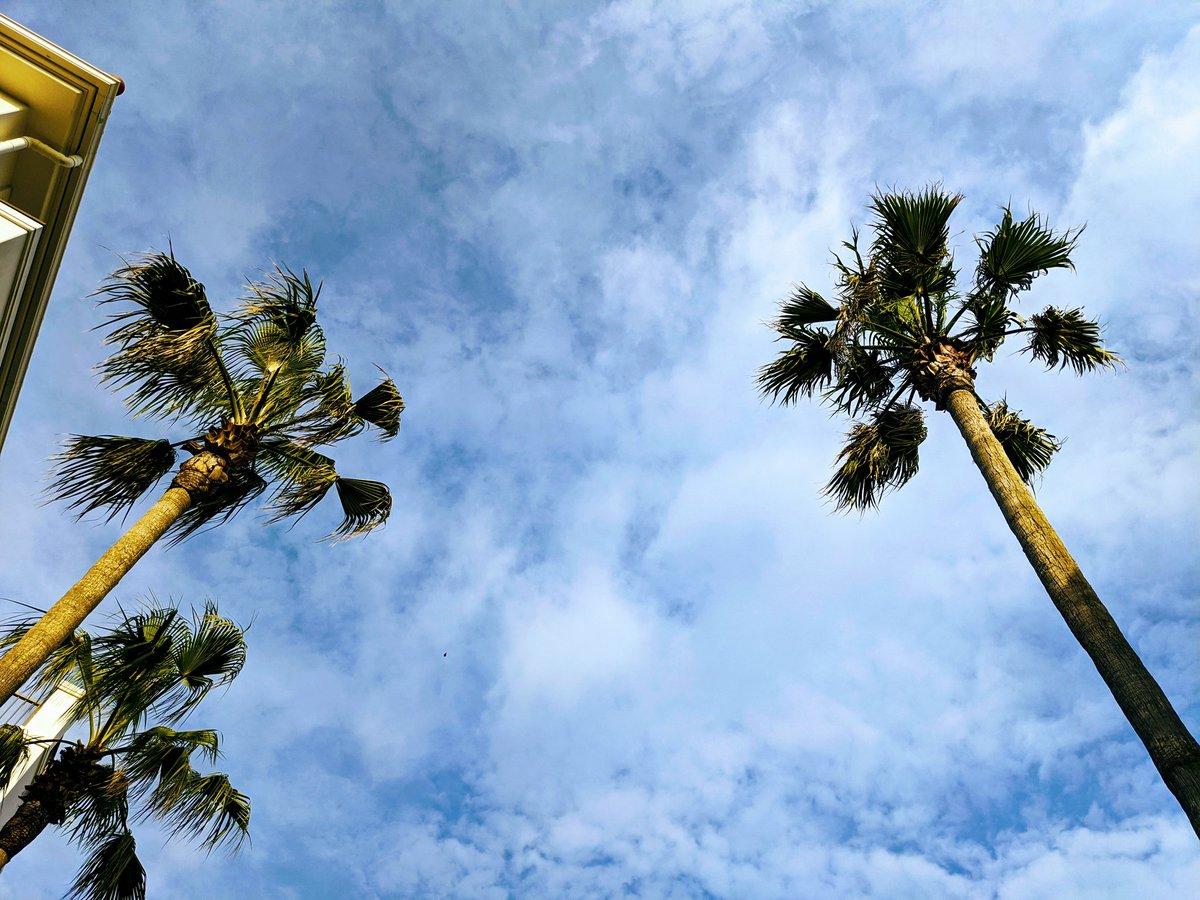 オホホ〜  茅ヶ崎はブルーの青空  ニッコリ全開ですわ  海水温は…  SEX WAX の MID COOL!!!  だべ  #茅ヶ崎 #湘南 #チワワ #サーフィン pic.twitter.com/5wM4jQj9G5