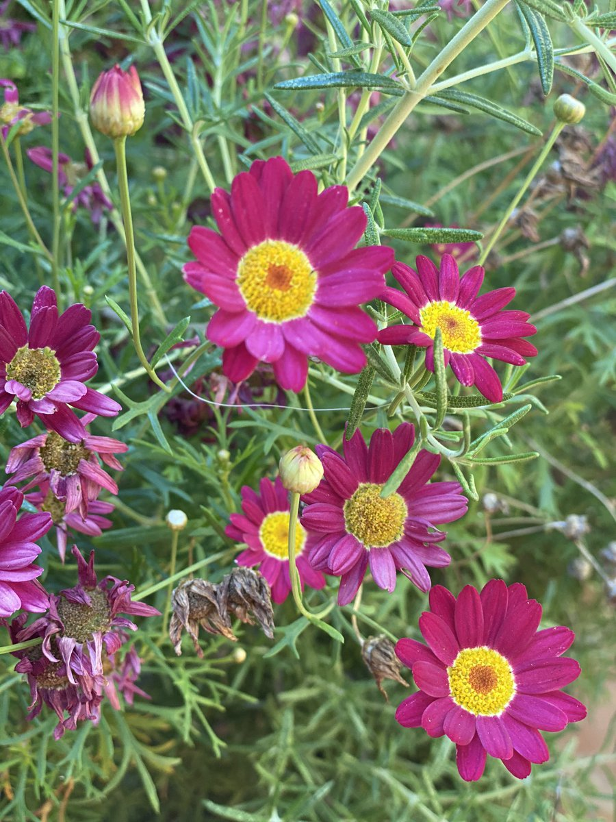 What are these #flowers? I love them pic.twitter.com/xwD0wB6k6x