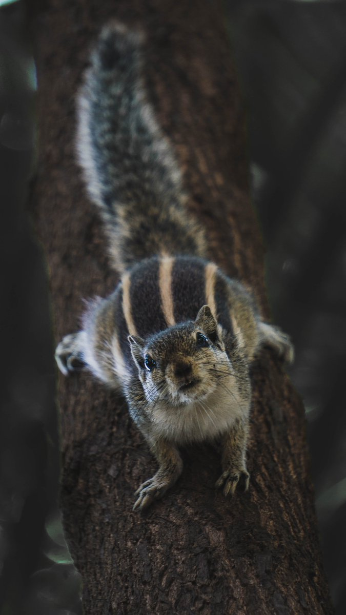 Hello, I hope you had a nice day! . . . #squirrel #threestripesquirrel #cuteanimals #animals #nature #wildlife #pets #cute #animalsarelove #animallovers #readbooks #reading #amwriting #writerslife #author   Photo by Unmesh on Unsplashpic.twitter.com/WAr6Bl57V2