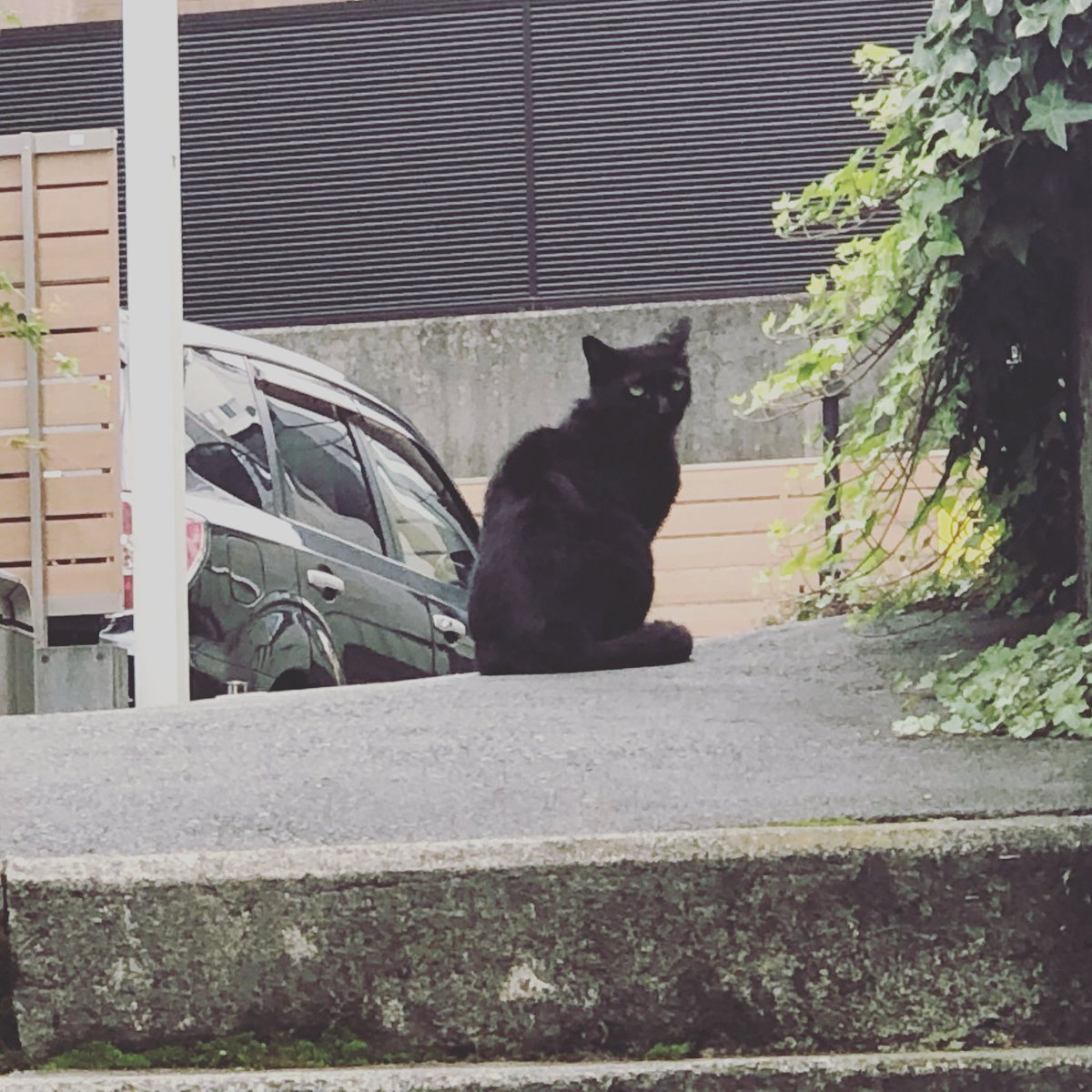 今日の検問は毛玉…もとい、餡子猫でした。  #猫 #ねこ #Cat #猫の検問 #黒猫 #餡子猫 #四谷