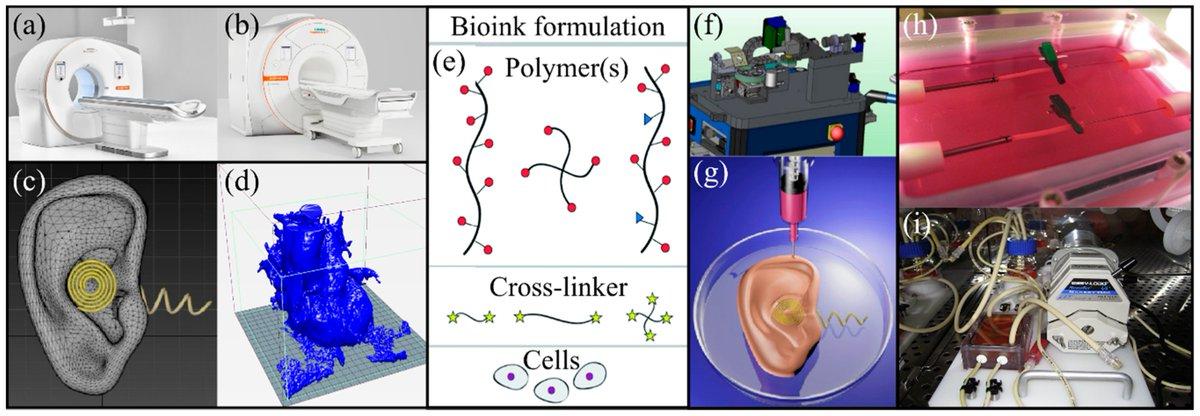 Read free full-text at:  #bioprinting #3Dprinting #additivemanufacturing #tissueengineering #mdpiapplsci