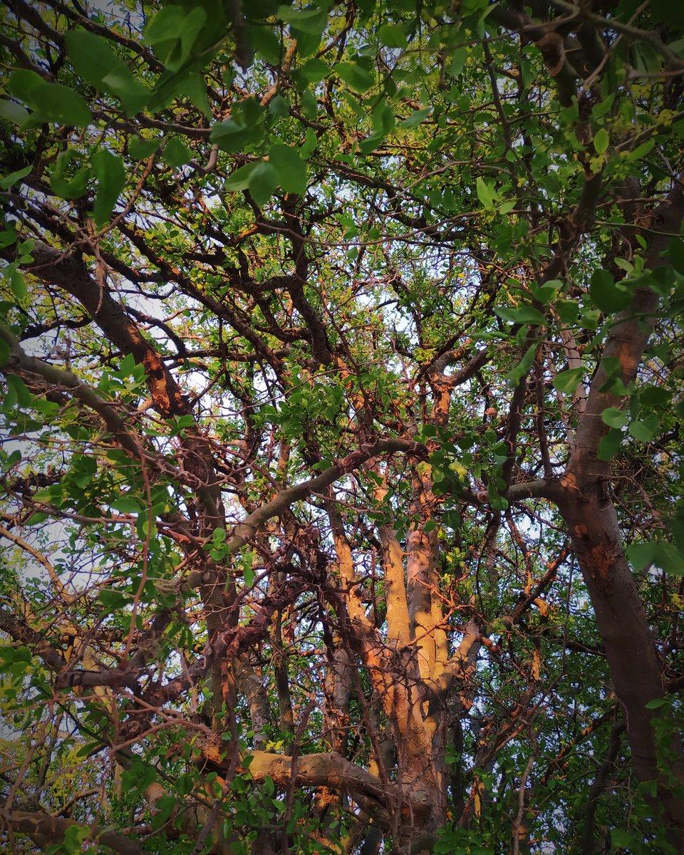 Nature and life   taken by @Xiaomi #redminote8 pic.twitter.com/WyU53otYDe