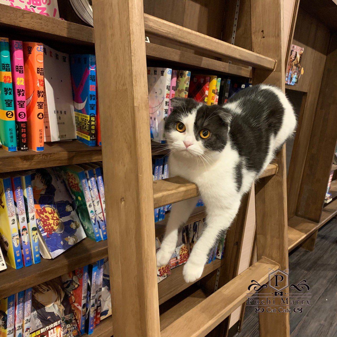 PuchiMarry 京都河原町店の猫