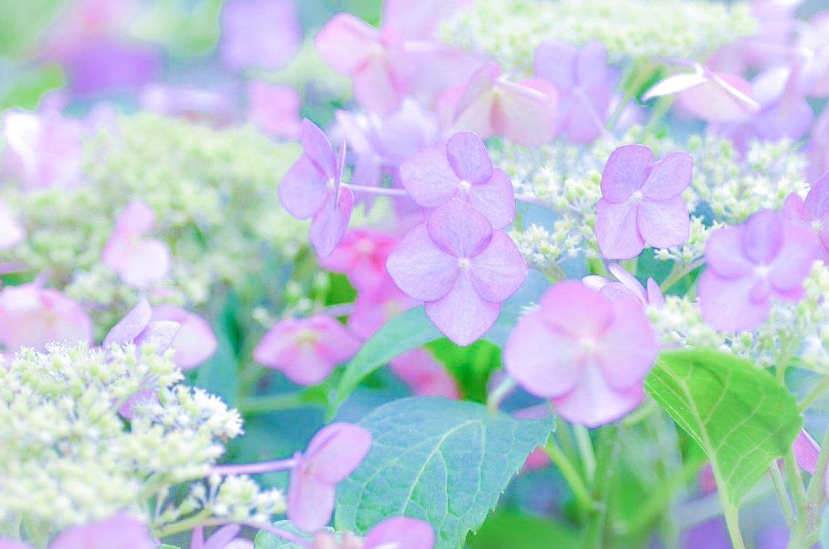 #花写真 #Flowers #photography