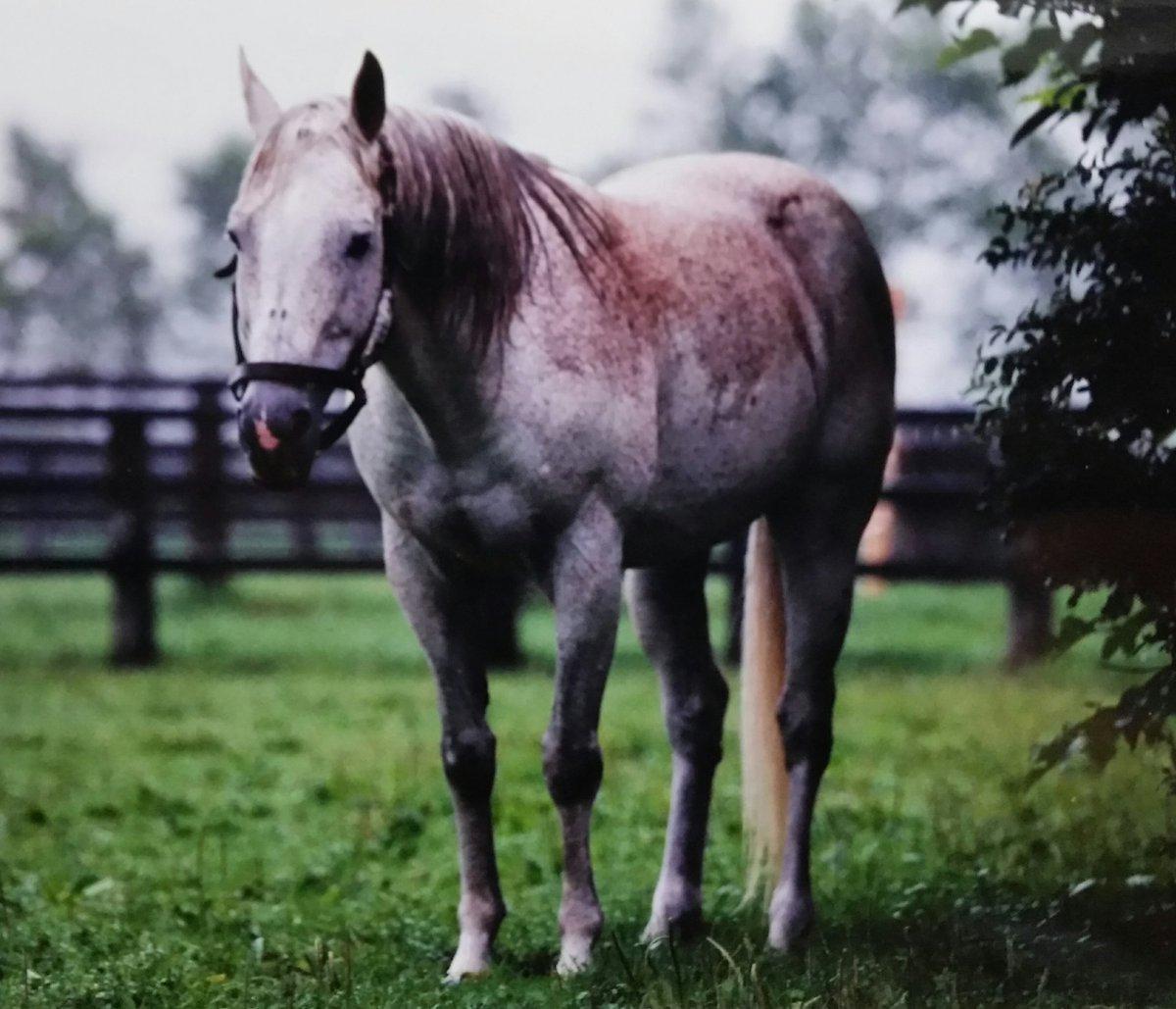 RT @bubblegumrobroy: 89年 第56代ダービー馬✨ ウィナーズサークル 皐月賞2着に好走しての参戦で中団前目からしぶとく脚を伸ばし芦毛馬初のダービー馬に🐎💨 しかも芝の初勝利がダービー #ダービー #東京優駿 https://t.co/z8vveP0mfk