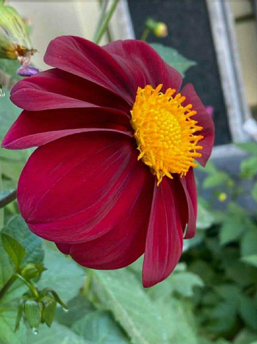 #naturelovers #flowerphotography #Flowers @impoliticpolit  @SWilkingHoran  @Worldwidettips  @AdrianaOzoresCF  @harishwings  @martiandiaries  @nplace1  @hindmarshisking  @ComesAnnemarie