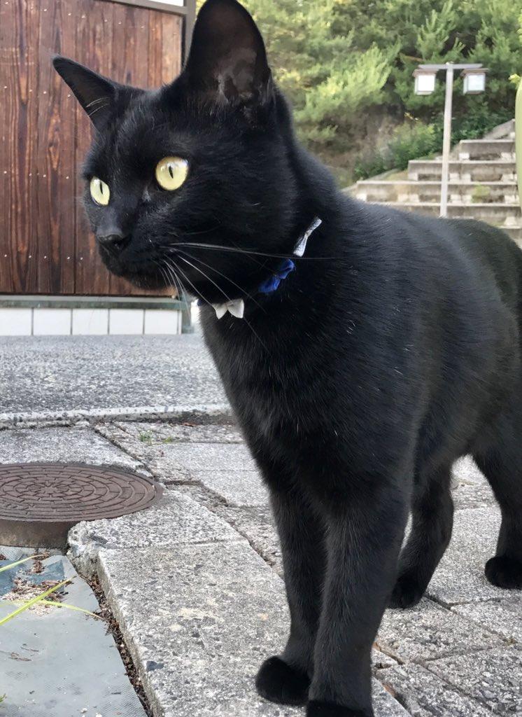 Ken-chan's Collar 8 (2017年 6月)🎨ケンちゃんの飼い主さんお手製の首輪を紹介していますニャー!#尾道 #尾道 #尾道市立美術館 #黒猫