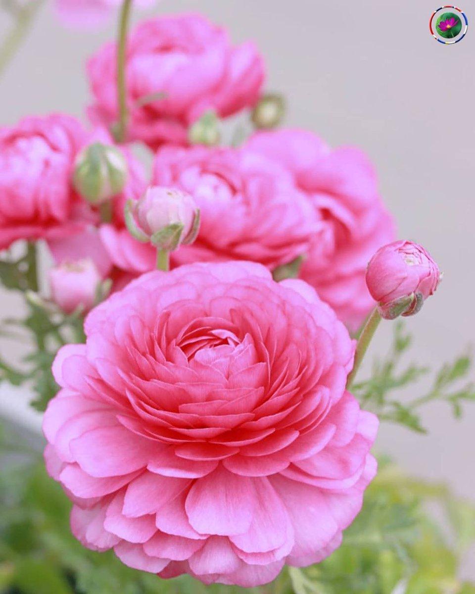 .@Vonlutzie Guten Morgen liebe Lutzi und wünsche dir einen wunderschönen Mittwoch 😊! #flowers #staysafe