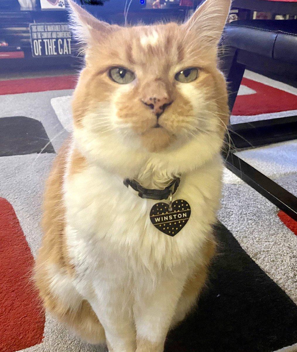 Feelin distinguished, duh. #cats #CatsOfTwitter #cute  #Quarantine #pets #WFHpic.twitter.com/bFqPFCU4Lb