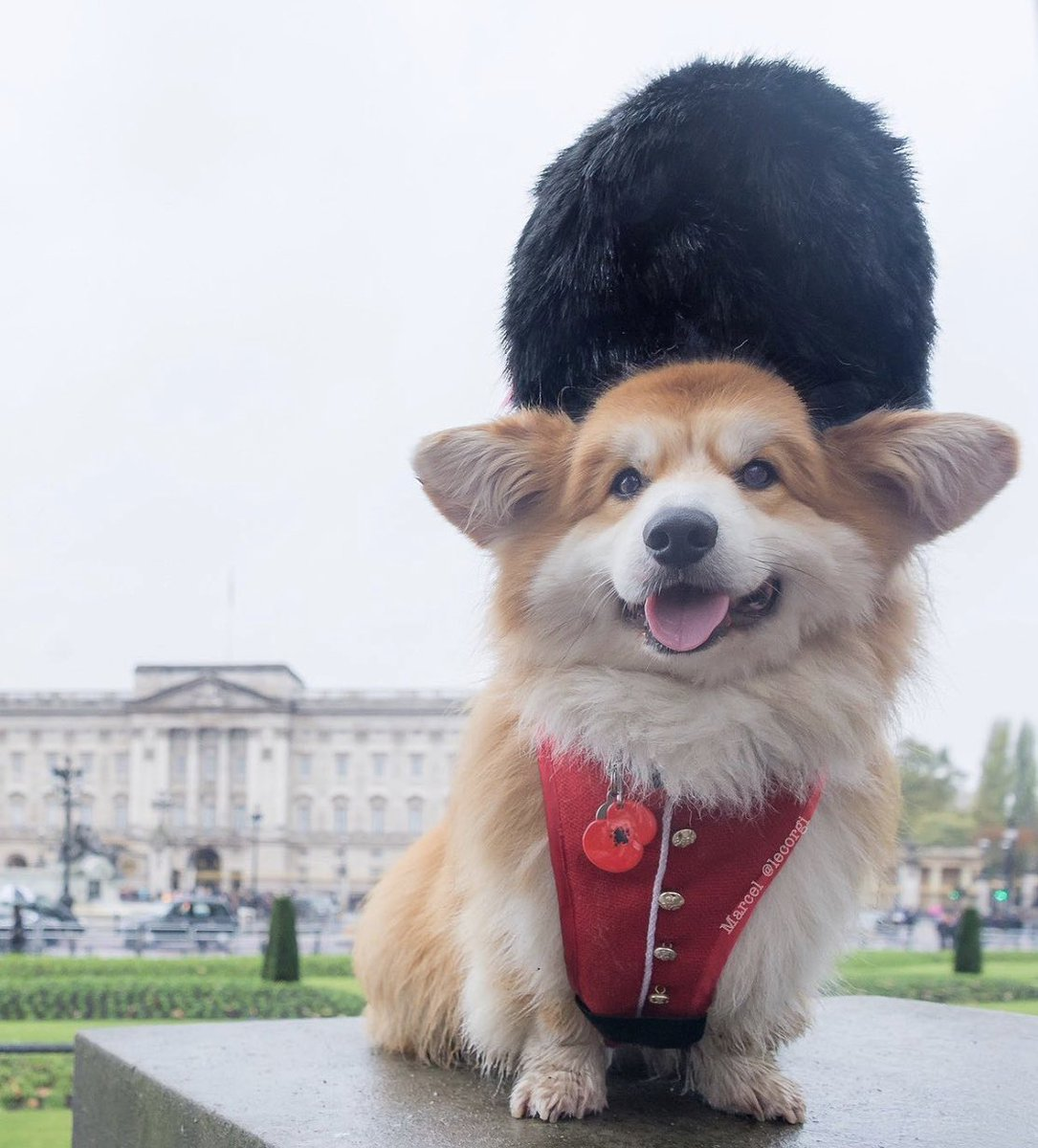 This is Marcel. He was once a member of the Royal Guard. Didn't last long because he couldn't stop smiling. 14/10