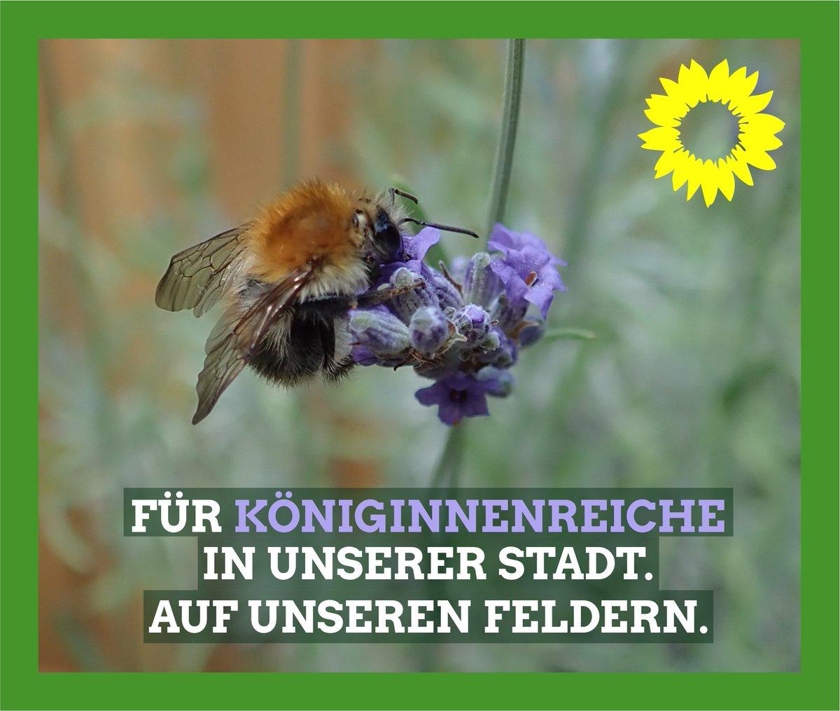 #Bienen