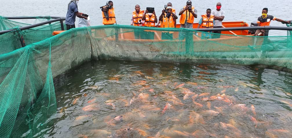 OGUN STATE GOVERNMENT SUPPORTS TILAPIA FISH FARM