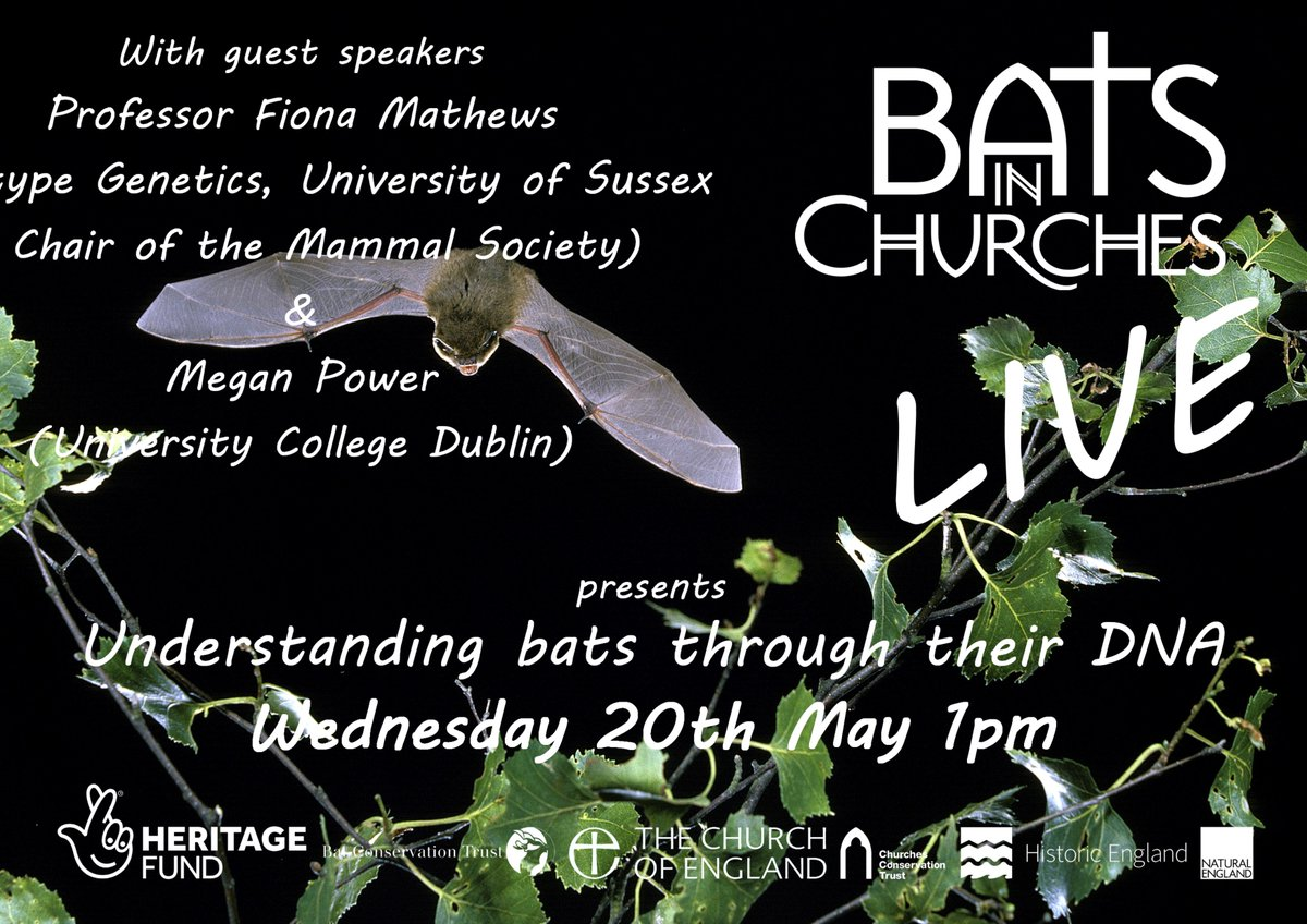 Toot toot! Its #BatsinChurchesLIVE today at 1pm🕺Come & get batty with genetics with help from Prof @MathewsFiona of @EcotypeGenetics & @Mammal_Society as well as bat DNA-whizz @MeganPower101 from @BatLabUCD & @JonesLabBris Theres still time to register: bit.ly/2SfjRNF