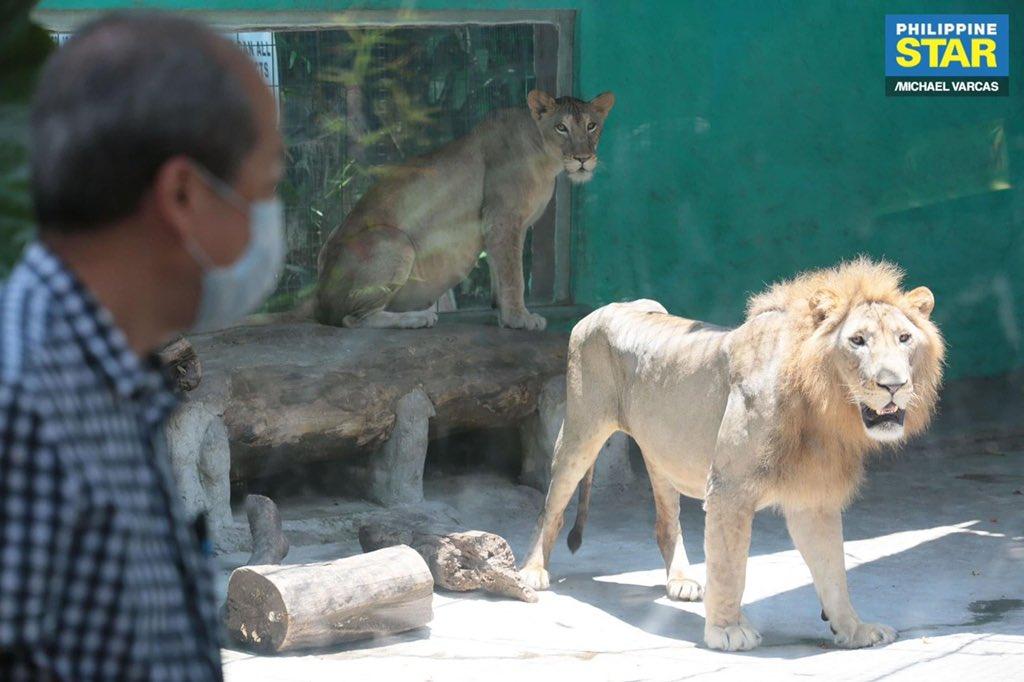 malabon zoo donation, <b> Malabon Zoo calls for donations in feeding its hungry tenants</b>